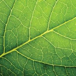 Obrúsky PAW L 33X33cm leaf close up
